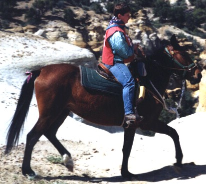 Competative trail horse