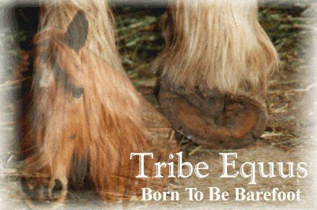 Tribe Equus T-shirt design
